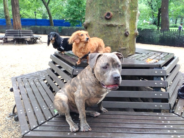 Manhattan hunting dogs