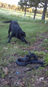 Scout and snake